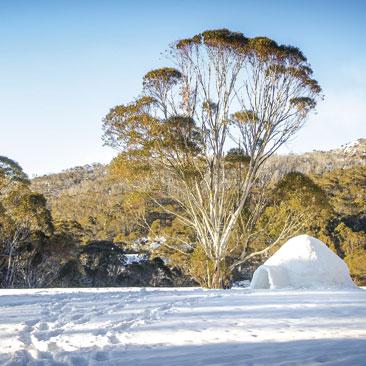 raquetes i construcció de coves de neu - guies la vall